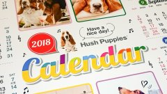 2018 ハッシュパピー カレンダー 画像